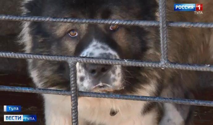 Тулякам запретили выгуливать без намордника потенциально опасных собак