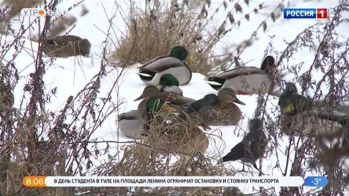 В Туле пересчитали зимующих птиц