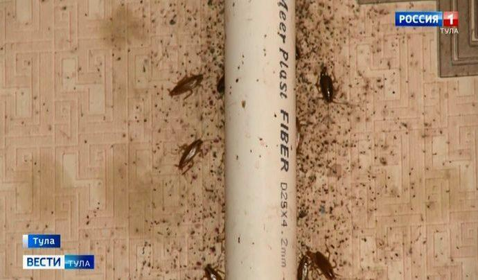 Вторжение: туляки не могут справиться с тараканами
