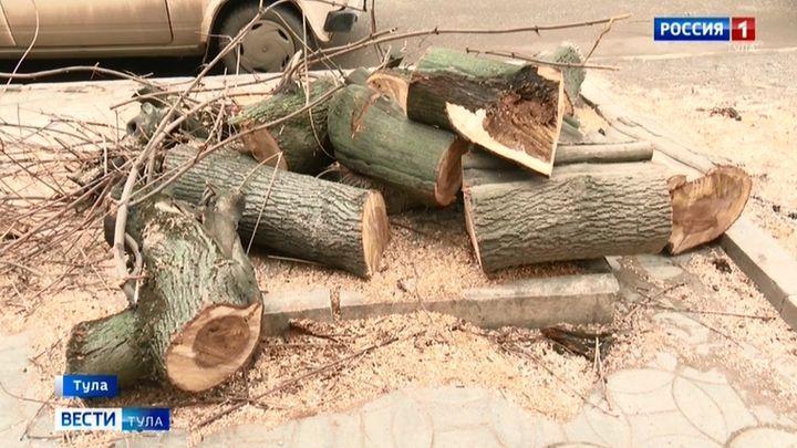 В Туле вместо спиленных деревьев не посадят новые