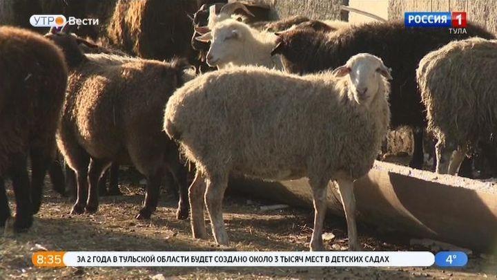 Тульским фермерам помогут со страховкой