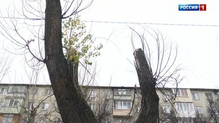 В городе Щёкино спилят 36 деревьев