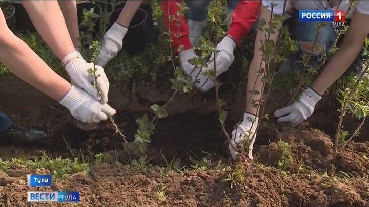 В Туле продолжаются работы по благоустройству и озеленению