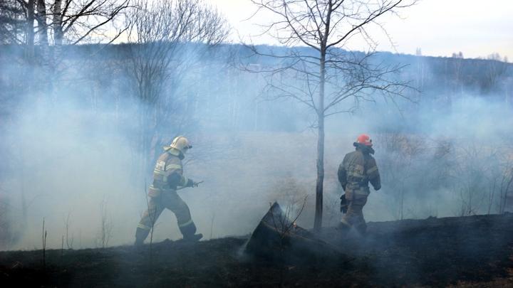 Пожар в лесу, пал травы