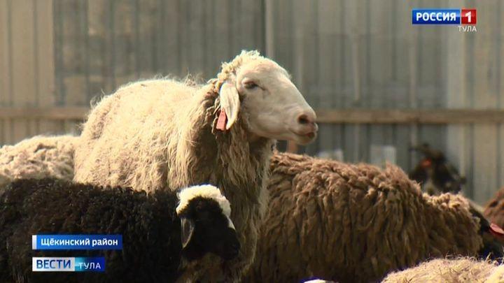Щёкинский фермер сделал акцент на экологичное животноводство