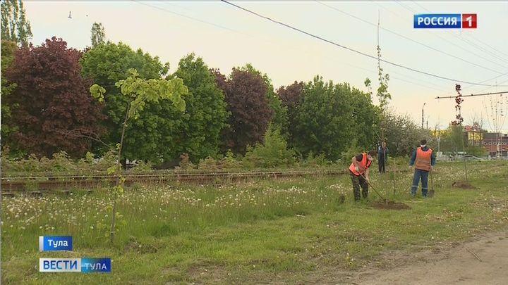 В Туле продолжаются работы по весенней посадке деревьев
