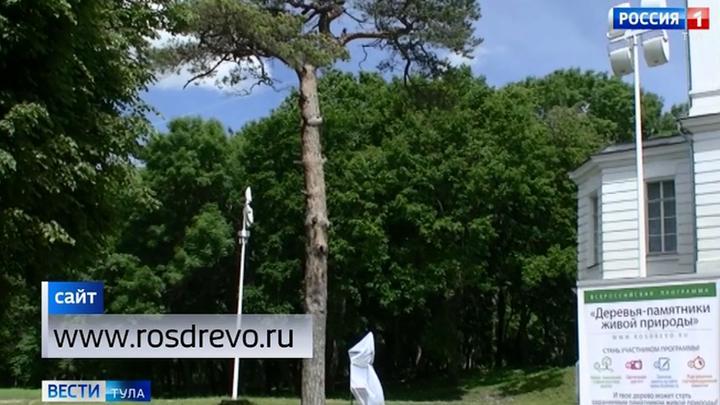 Два дерева из Тульской области признаны памятниками природы
