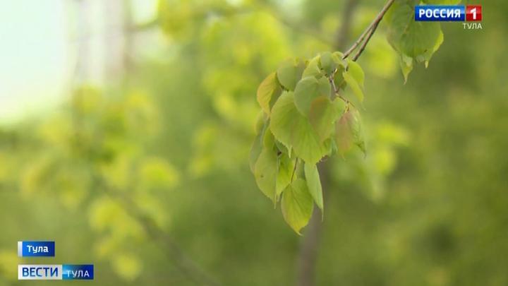 В Туле планируют высадить более 500 деревьев