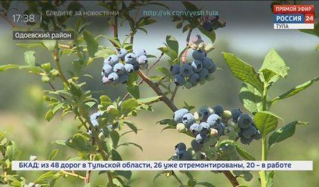 Россия 24 Тула. Эфир от 30.07.2020