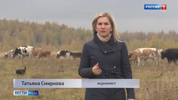 Программа ГТРК «Тула» победила во всероссийском конкурсе «Смарт. Эволюция»