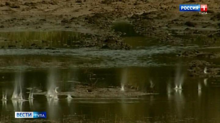 В Тульской области выявлено 57 случаев браконьерства