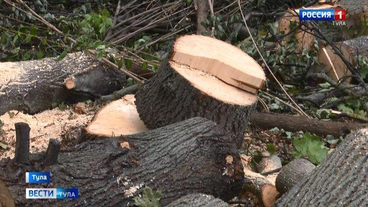 Зачем на территории детской больницы в Туле начали пилить деревья