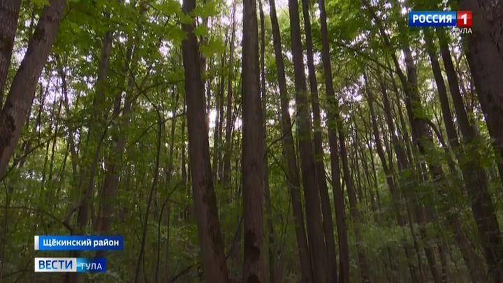 Яснополянские лесники прозевали незаконный захват земель