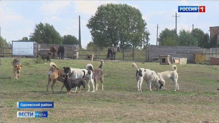 Старожилы села Березово Одоевского района не нашли общий язык с новыми поселенцами