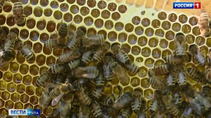 Тульского пчеловода привлекли к административной ответственности