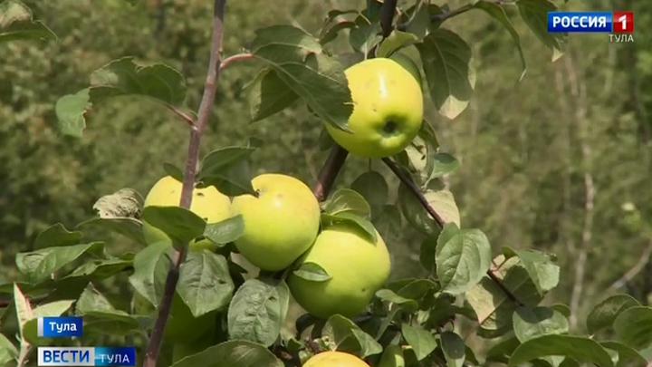 Православные туляки отмечают Яблочный Спас