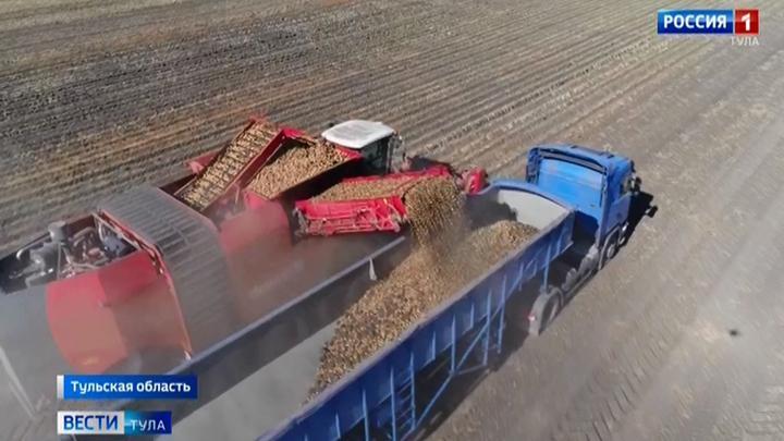 Тульские аграрии рассчитывают на хороший урожай картофеля