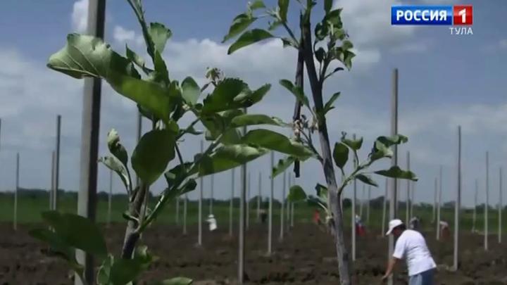 В Тульской области появятся два новых яблоневых сада