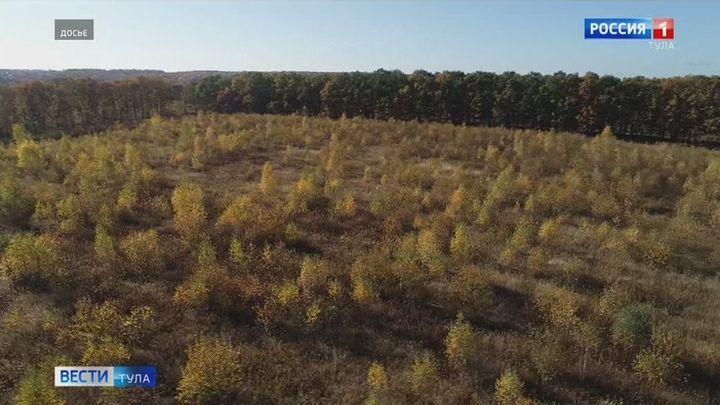 Алексинские леса проверили на наличие повреждений