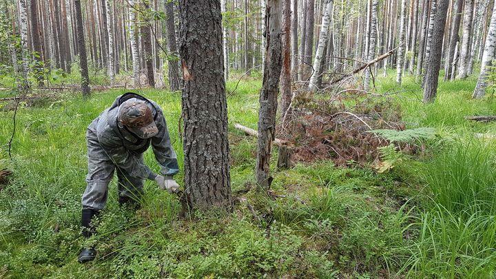 В Тульской области оздоравливают леса