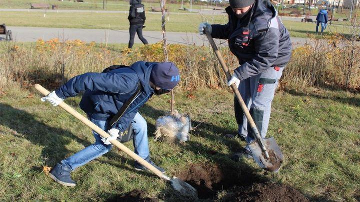 Акция «Бережно о живом» прошла в ефремовском парке