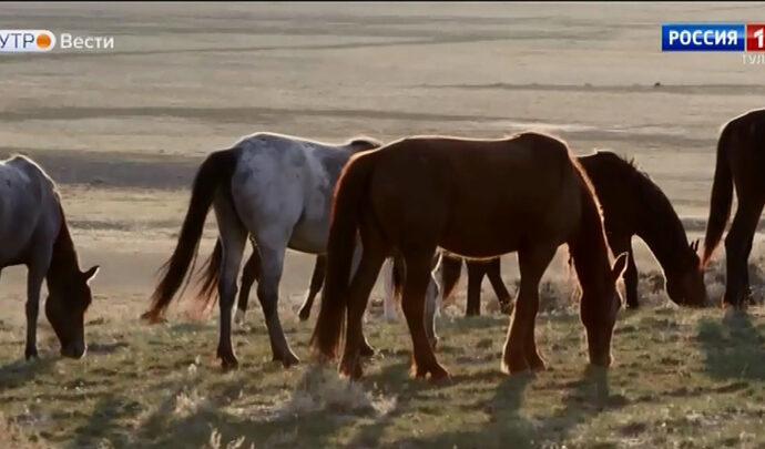 В «Тульских древностях» открылась выставка «По коням!»