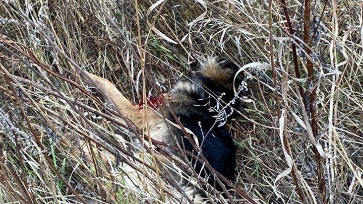 В Тульской области живодёры вновь отстреливают собак
