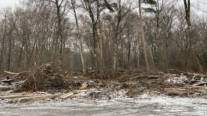 Новомосковский застройщик обещает заменить вырубленные деревья на озеленение