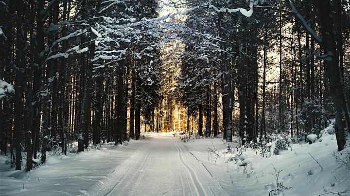 Зима, мороз, лес