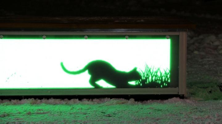 На главной площади Тулы гуляет светящаяся кошка