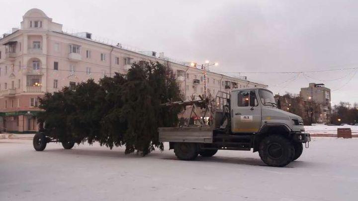 В Новомосковск приехала главная ёлка города
