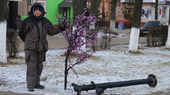 В Новомосковске на улицах города «зацвела» сакура