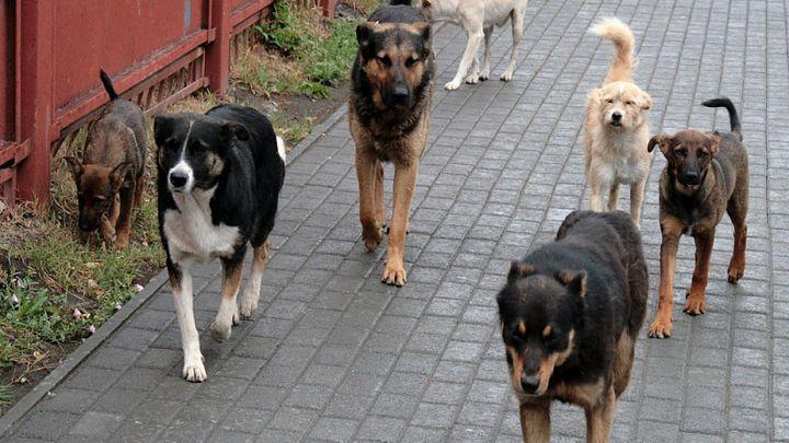 Алексинцы укажут каких бездомных собак надо ловить