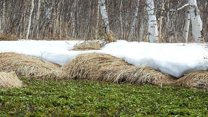 Весна в Тульскую область может прийти раньше