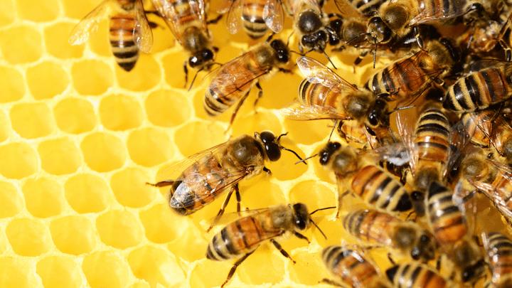 Вне зависимости от строя, пчёлы трудятся по-прежнему