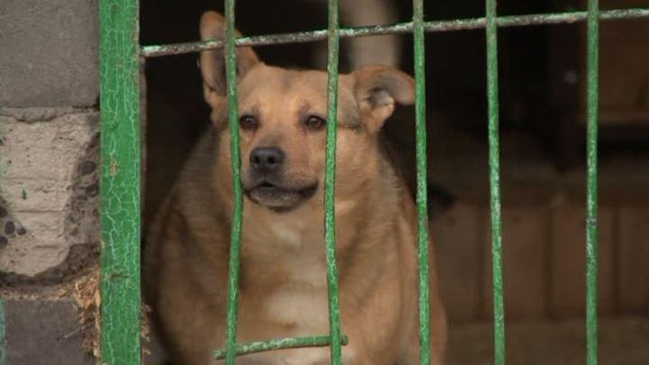 10 млн рублей направят на отлов бездомных животных в Туле