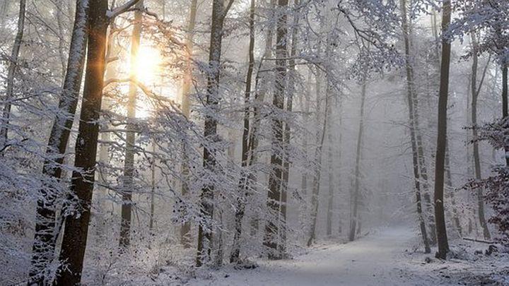 Чем заменить солнечный свет зимой