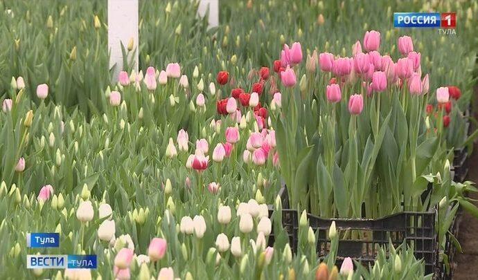 В тульских цветочных теплицах уже наступила весна