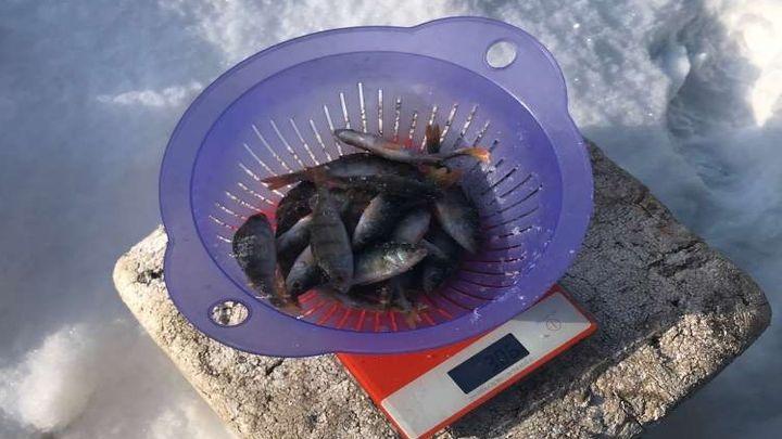 Ловили большую и маленькую: в Узловой состоялся Фестиваль зимней рыбалки