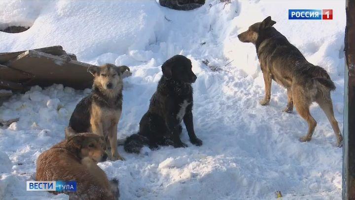 В Новомосковске устанавливают надзор за бездомными животными
