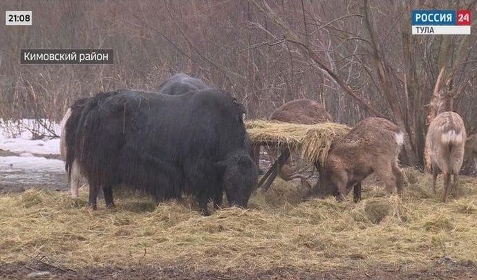 Россия 24 Тула. Эфир от 08.04.2021