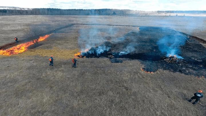 В Алексине произошел лесной пожар
