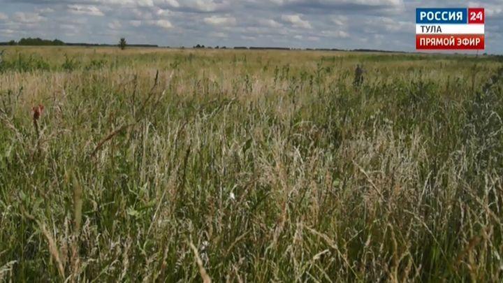 Луговые степи в Тульской области официально стали памятниками природы