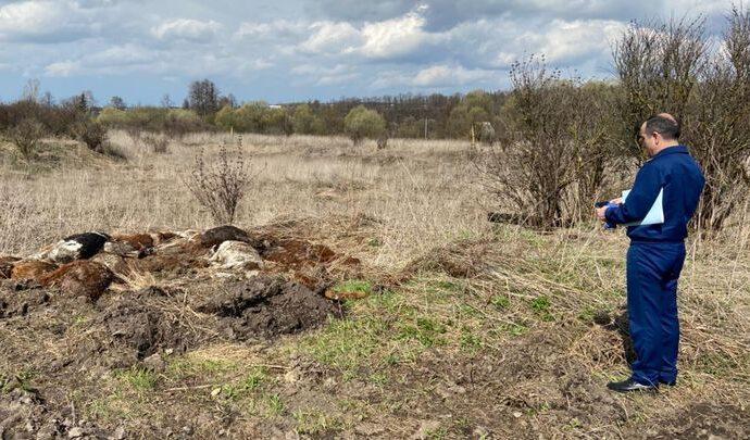 В Чернском районе произошёл массовый падёж скота