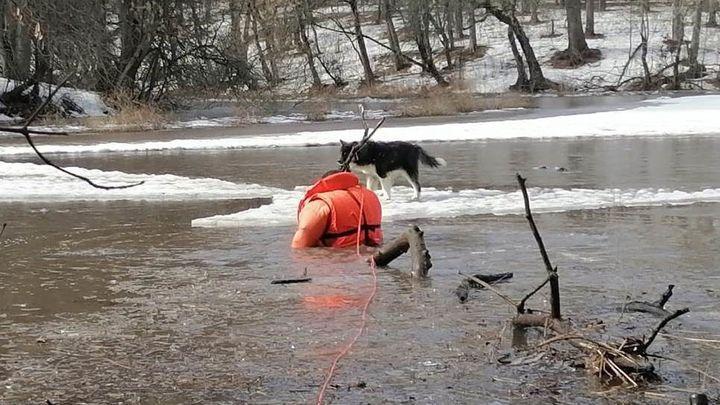 Ефремовские спасатели вызволили из беды друга человека