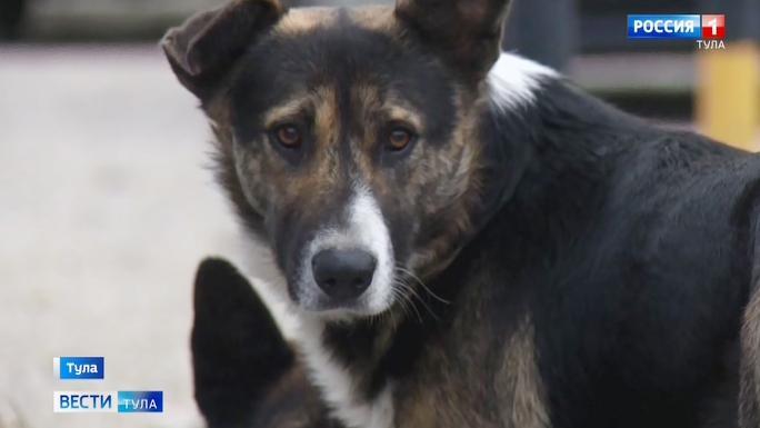 Стая собак наводит страх на жителей тульского Заречья