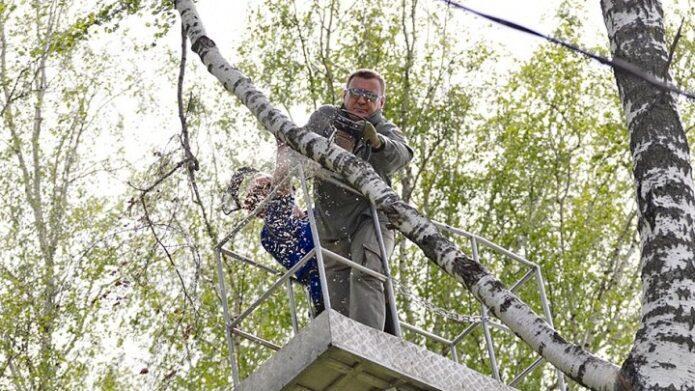 Алексей Дюмин опиливает деревья в Баташёвском саду на субботнике