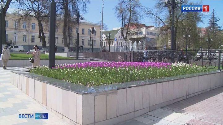 В Туле высадят 360 тысяч цветов и 460 молодых деревьев