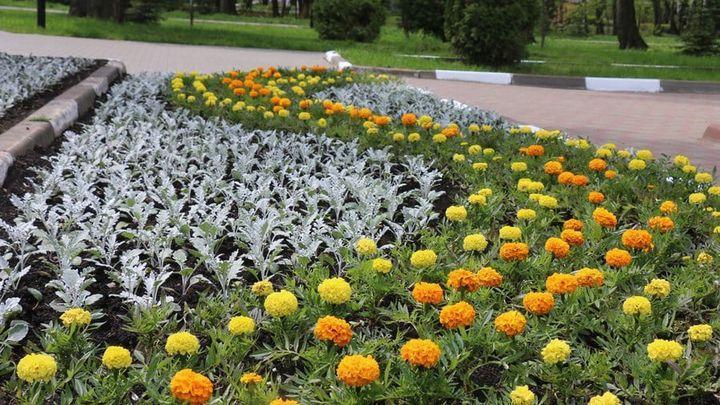 Более 200 тысяч цветов будут украшать Новомосковск