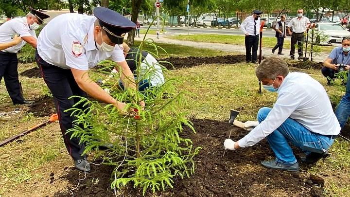 В День ГАИ-ГИБДД в Туле заложили еловую аллею